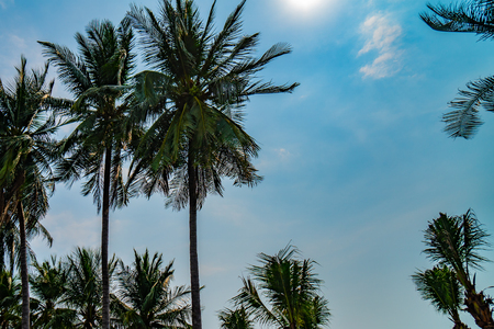 Palm trees against blue sky, Palm trees at tropical coast, vintage toned and stylized, coconut tree,summer tree background Stock Photo