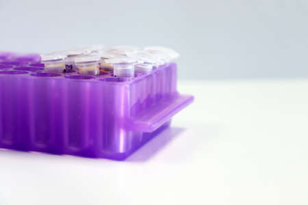 Micro Centrifuge tube with blood sample in solution, for testing anti-biotic with tips micropipette and purple eppendorf racks, biotechnology analysis experiment for anti-virus. Imagens