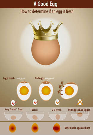 to determine: Vector of How to determine if an egg is fresh