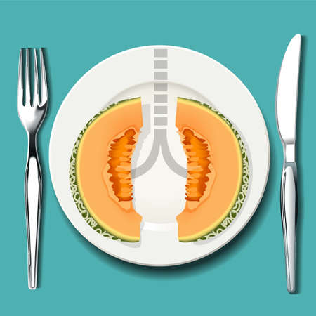 Vector of cantaloupe is best food for your lungs. Smart food choices may help you breathe easier if you have asthma.