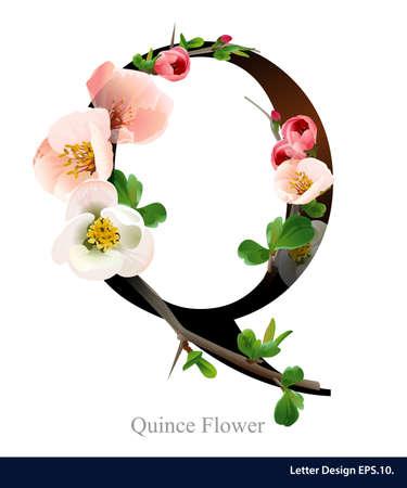 핑크 모과 꽃 편지 Q 벡터 알파벳입니다. 로고 ABC 개념 유형입니다. 타이포그래피 디자인