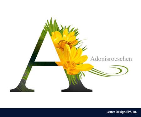 Letter A vector alphabet with adonisroeschen flower. ABC concept type. Typography design