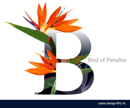 Letter B vector alphabet with bird of paradise flower. ABC concept type. Typography design