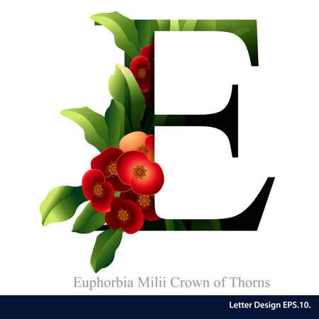 가시 꽃의 유포르비아의 milii의 왕관과 함께 문자 E 벡터 알파벳입니다. ABC 개념 유형입니다. 타이포그래피 디자인 일러스트
