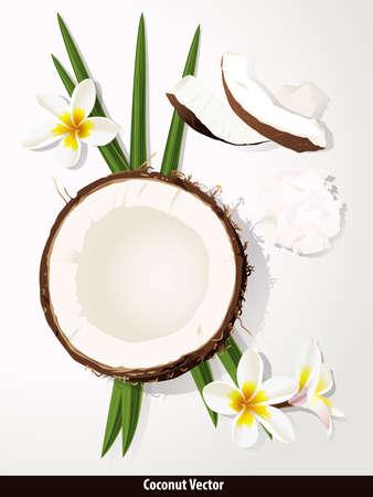 cocotier: Vecteur � propos de la noix de coco sur fond blanc avec Plumeria fleurs