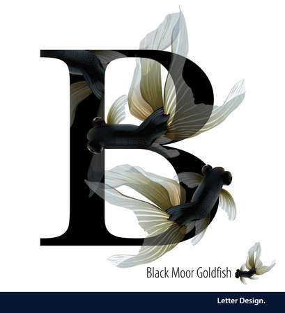 abc book: illustration of Letter B for Black Moor Goldfish alphabet. English abc with animals Education on White background.