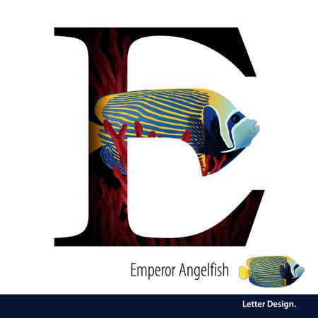 alfabeto con animales: Ilustración de la letra E para el emperador Angelfish de aparentes alfabeto de coral. abc Inglés con los animales Educación sobre fondo blanco.