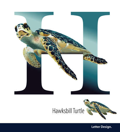 letter h: illustration of Letter H for Hawksbill Turtla alphabet. English abc with animals Education on White background.