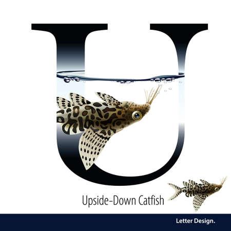 illustration of Letter U is Upside Down Catfish alphabet. English abc with animals Education on White background. Ilustração