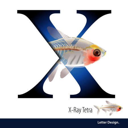 tetra fish: illustration of Letter X is X Ray Tetra alphabet. English abc with animals Education on White background.