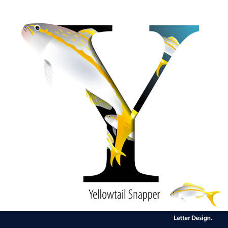 illustration of Letter Y is Yellowtail Snapper alphabet. English abc with animals Education on White background.