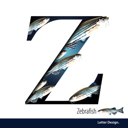 zebrafish: illustration of Letter Z is Zebrafish alphabet. English abc with animals Education on White background. Illustration