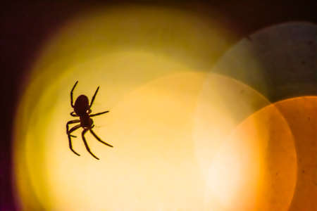 arthropod: Spider silhouetted against a bokeh of bright orange lights in the darkness, close up corner view with copy space