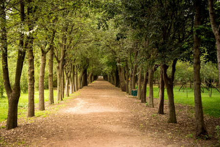 Tree lined path in a park in Mexico City. One point perspective Stock Photo