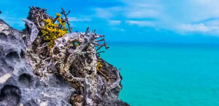 Tropical scene with rocks against turquoise ocean, Turks Caicos Islands
