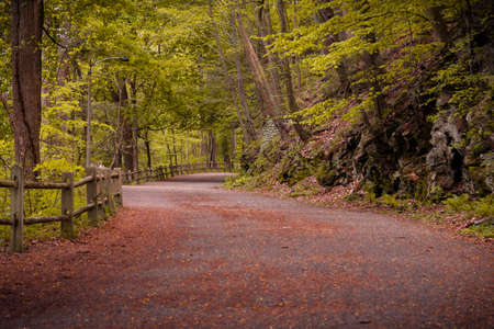Meandering dirt road or hiking trail, through lush green forests in Philadelphia with a rustic wooden fence and leafy green woodland trees