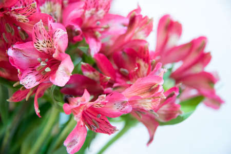 Cluster of delicate red pink lilies in a close up view with selective focus to a flower on the left of the frame and copy space Reklamní fotografie