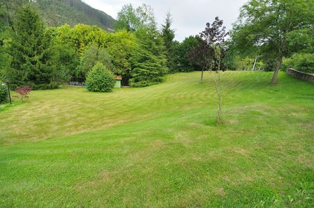 garden with a big area of lawn and diferent trees photo