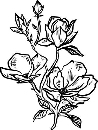 Flowering magnolia branch of scratch style. Sketch engraving vector illustration. Scratch board style imitation. Black and white hand drawn image.