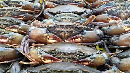 the crab: cangrejo vivo en la cesta
