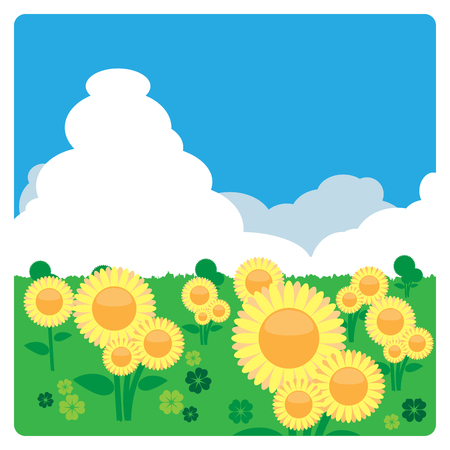 clovers: Sunflower meadow with 4 leaves clovers in sunny day