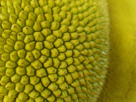 Closed up skin of fresh young green jackfruit