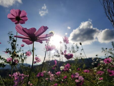 Beatiful flower in meadow with lighting condition