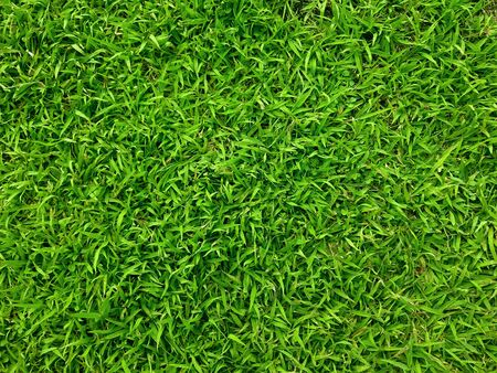 Closed up top eye view of green grass field