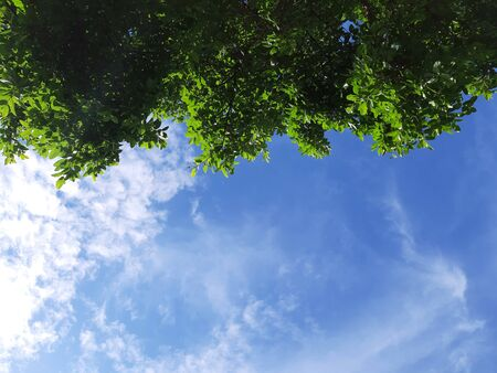 Green leaves and the blue sky in suuy day with copy space Stock Photo