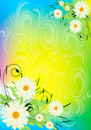There are bouquets of camomiles on an abstract  background  Illustration