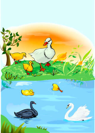 A pond, goose, small goose, duckling, white, and black swans Vector