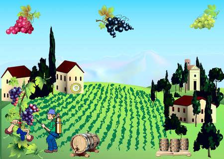 Valley of vineyards, at home, barrels, grape-vine, care of vine Illustration
