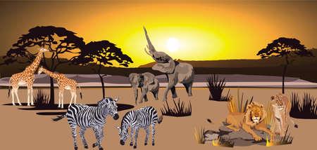 Animals of the African savanna, lions, elephants, giraffes and zebra Vector