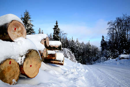 trunks of felled trees lying in a row and covered with snow Stock Photo