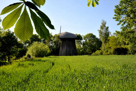 Green corn young corn and old wooden mill Stock Photo
