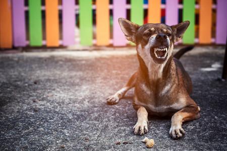 怒っている犬。