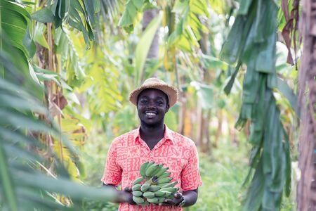 African farmer holding banana at organic  farm