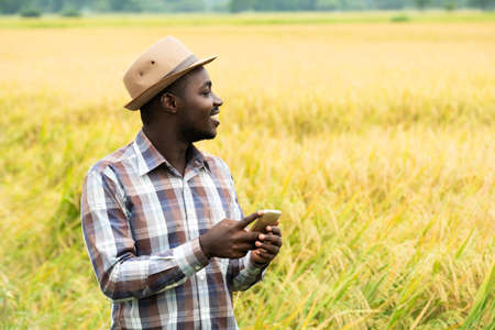 African farmer using smartphone in organic rice field with smile and happy.Agriculture or cultivation concept