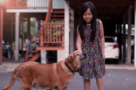 Little girl gently stroked the dog's head with kindness and love