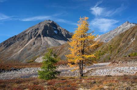 Couple of trees in the mountains ridge Tunkinsky  photo