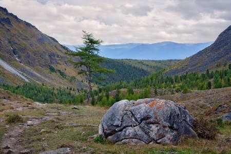 tunka range: Stone and larch have trails. Tunka range of the Eastern Sayan in Buryatia