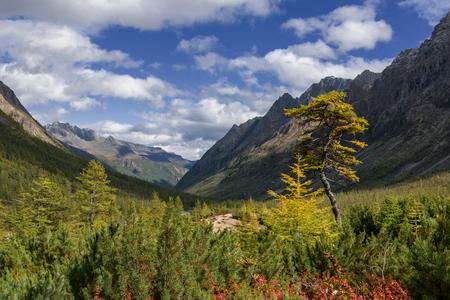 산에서가 Kodar 릿지입니다. 동부 시베리아, Transbaikalia, 치타 지역입니다.