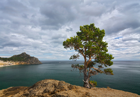 Lonely pine tree on a cliff above the lake Baikal