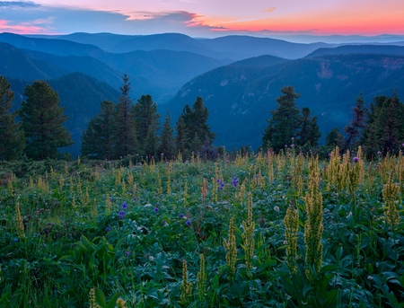 After Sunset on ridge Khamar-Daban Imagens