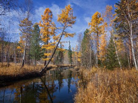Autumn River Olha Imagens