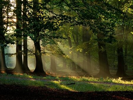 beautiful woodland: beech forest with fog and warm sunshine in autumn, fall