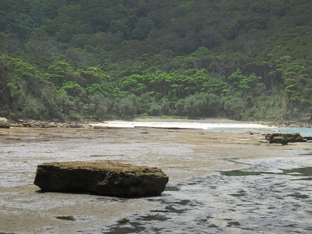devonian: rocky tidal shore in australia with forest in the background