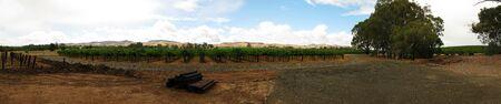 panorama of a vine yard in barossa valley, australia photo