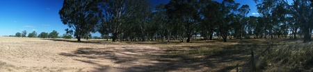 panorama of the outback, bushland, in south australia