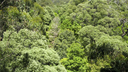 australian rain forest seen from above into the canopy photo